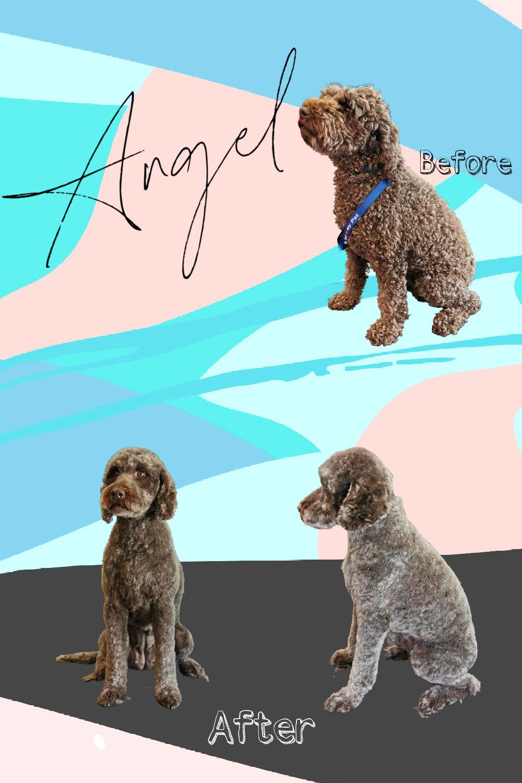 Angel B&F