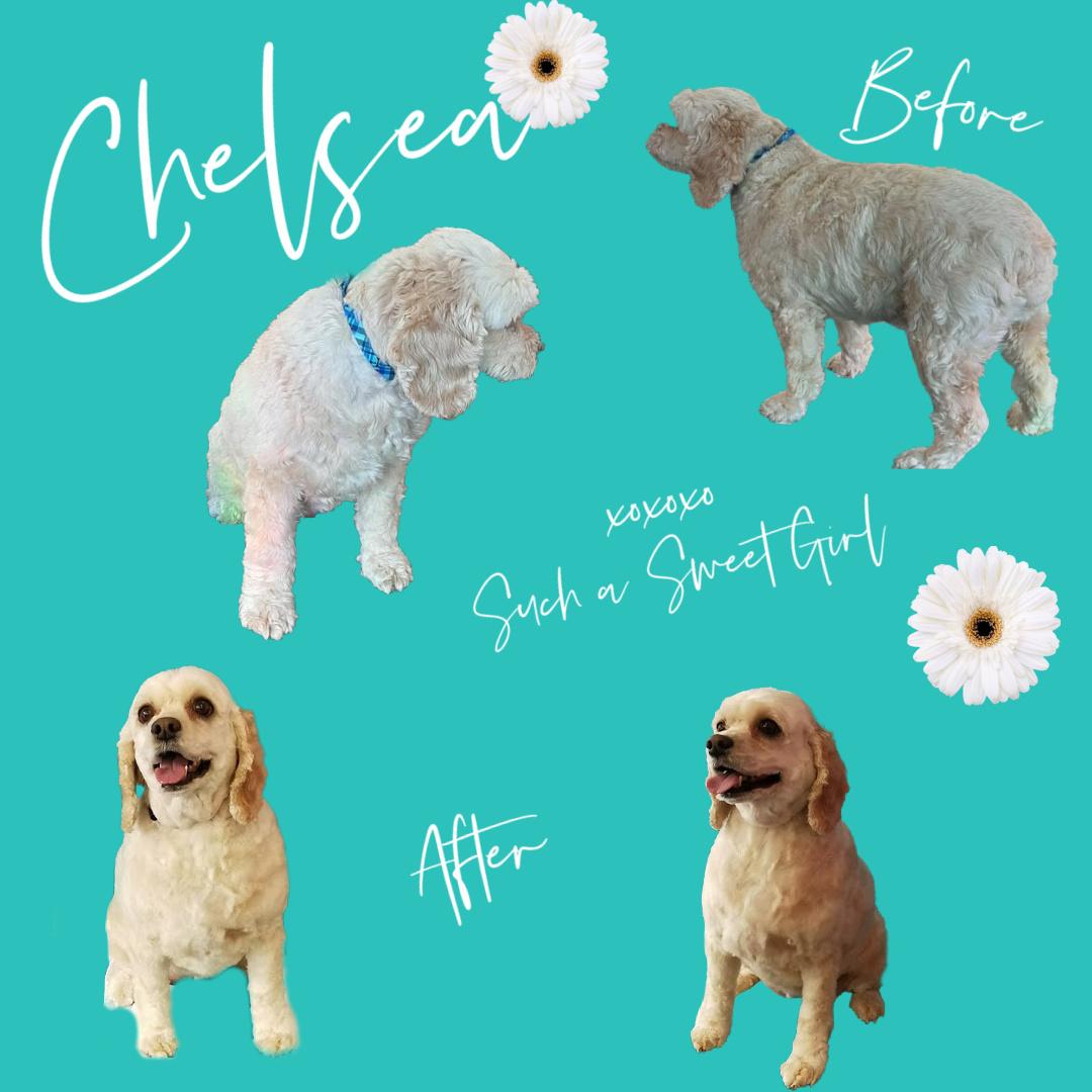 Chelsea B&A
