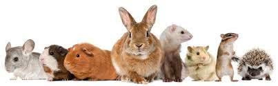mixed mammals