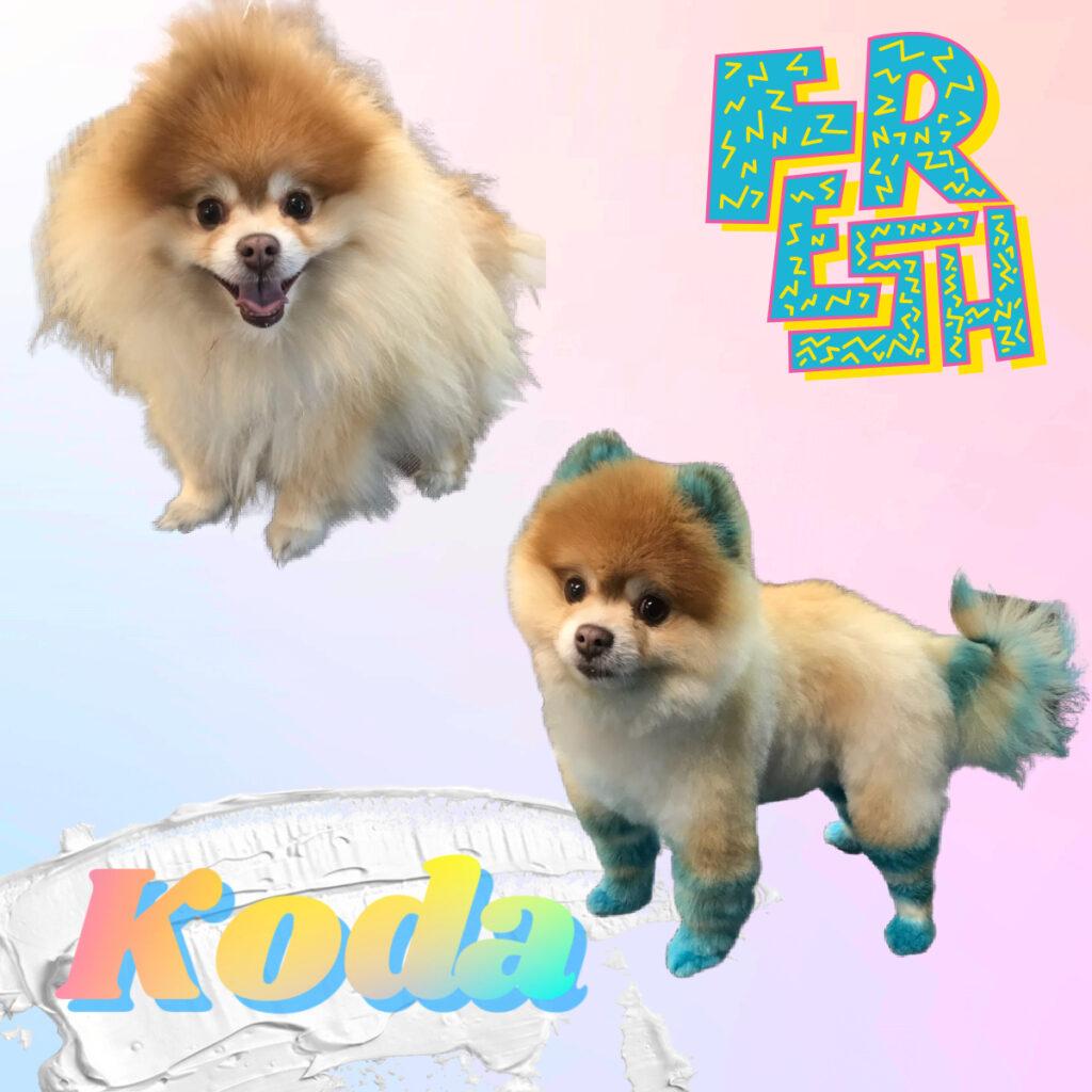Koda got some new color!!